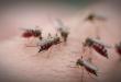 Откриен нов вирус: Го пренесуваат комарците